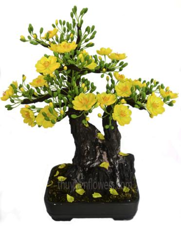 Hoa dat – Bon sai mai