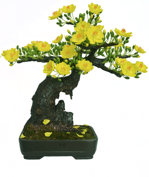 Hoa dat - Bonsai mai 4